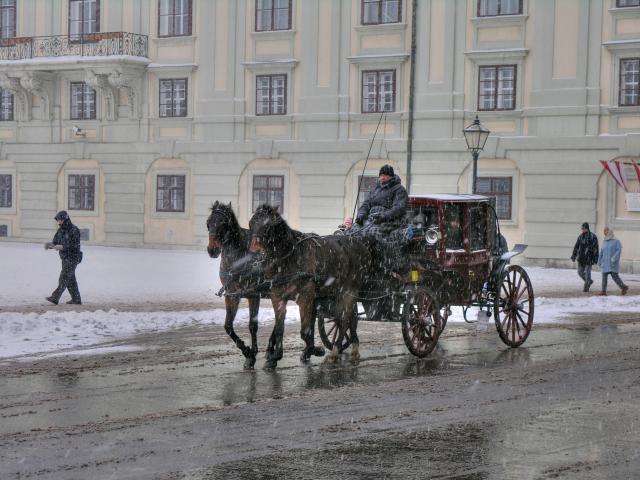 Hansom cab horse