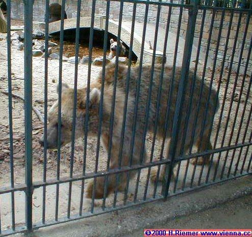 Animals in Vienna Zoo at park Schoenbrunn